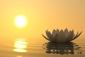 lotus im licht